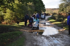 2011 New Forest