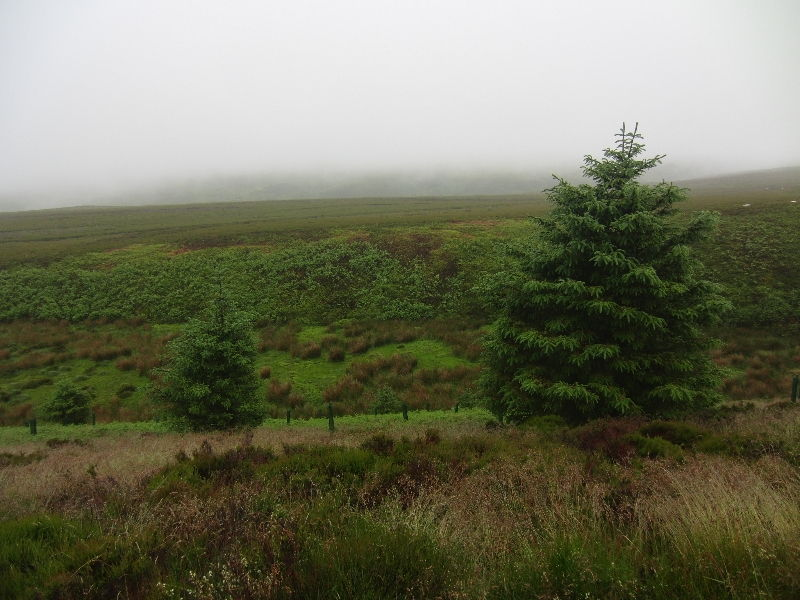 hamsterley-forest-durham-010