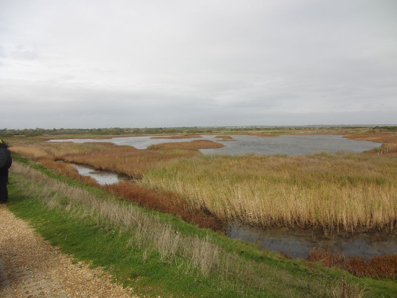 pennington-marshes-038-800x600