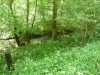 Wyre Forest 019 (640x480)