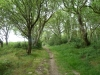 Middlebere Heath 052 (640x480)