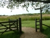 Middlebere Heath 055 (640x480)