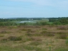 Middlebere Heath 062 (640x480)
