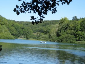 *July Regional Ramble – Arundel River, Lake and Wetlands
