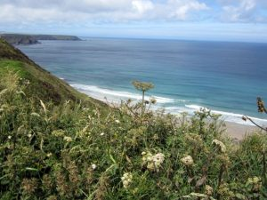 *June 19 National Ramble –  Tehidy North Cliffs