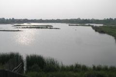 2007 Barns Wetland Centre, London
