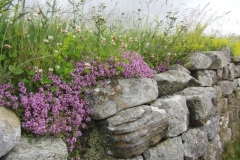 2011 Hadrian\'s Wall