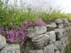 hadrians-wall-and-caerlaverock-017-sm