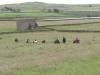 baldersdale-barnard-castle-069