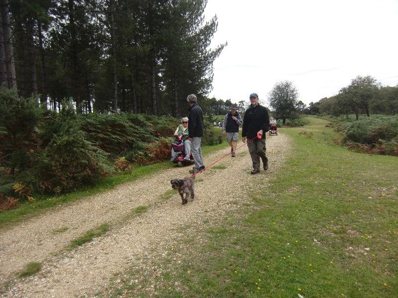 bolderwood-new-forest-034