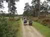 bolderwood-new-forest-030