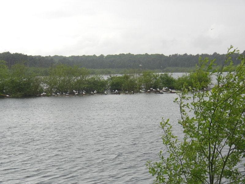 delamere-forest-015