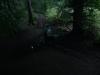 delamere-forest-001