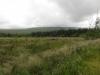 gisburn-forest-059