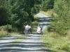 beddgelert-forest-030-800x600