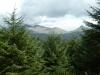 beddgelert-forest-047-800x600