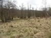 agm-birches-valley-devils-dumble-030-800x600