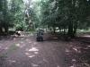 eyeworth-woods-new-forest-044