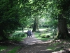 eyeworth-woods-new-forest-046