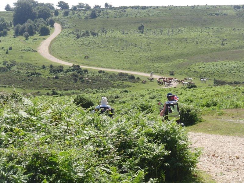 hampton-ridge-new-forest-john-006
