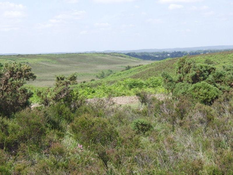 hampton-ridge-new-forest-john-036