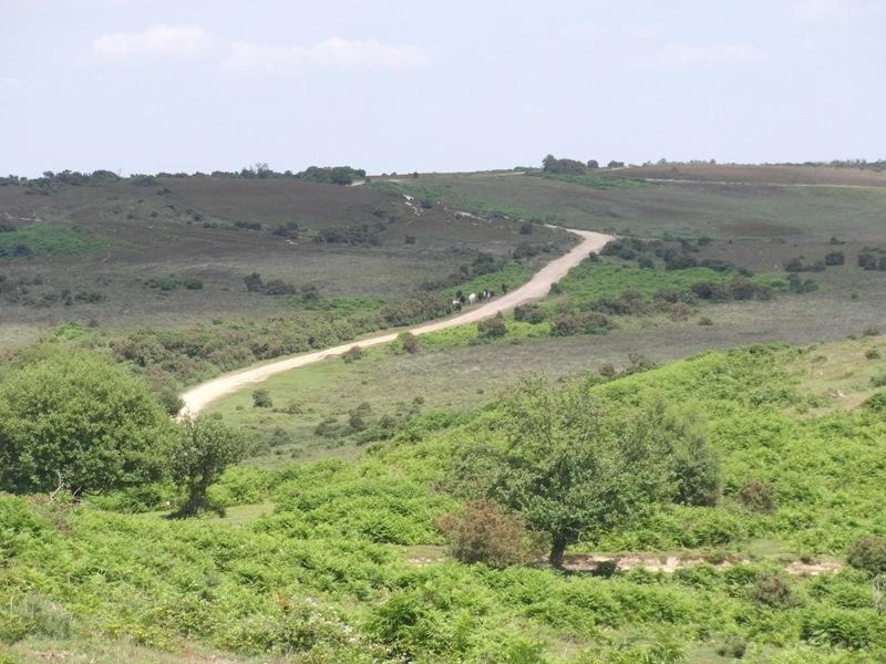 hampton-ridge-new-forest-john-054