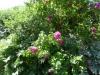 Croome Landscape Park 010 (640x480)