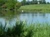 Croome Landscape Park 026 (640x480)