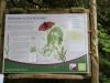 Leighton Moss 039 (640x427)