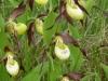 Leighton Moss 123 (480x640)