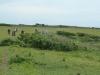 Purbeck Hills, Cliffs & Quarries 064 (640x480)