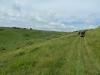 Purbeck Hills, Cliffs & Quarries 095 (640x480)