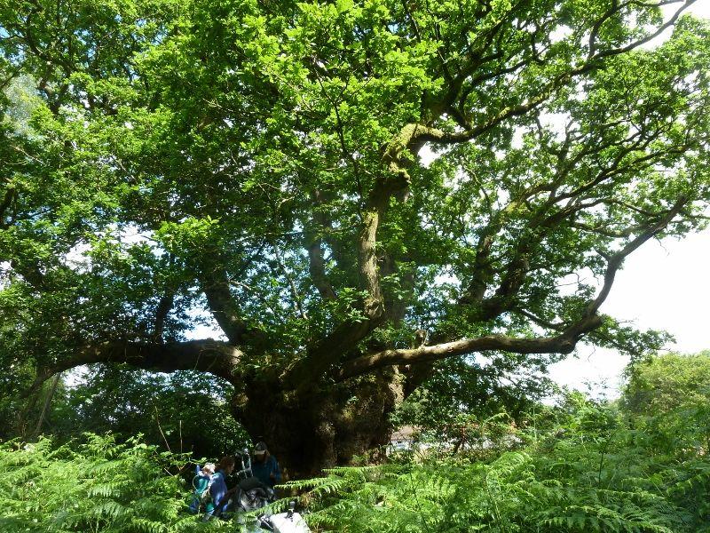 Savernake Forest 004 (800x600)