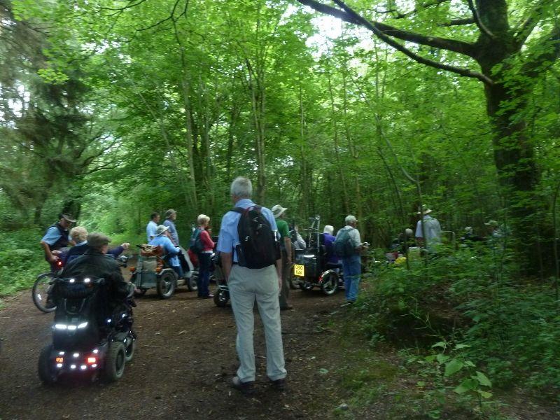Savernake Forest 005 (800x600)