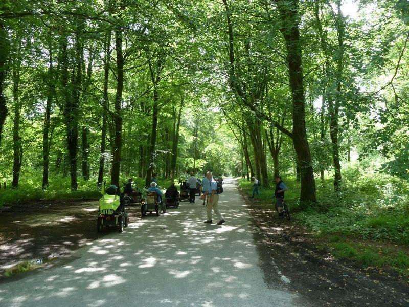 Savernake Forest 008 (800x600)