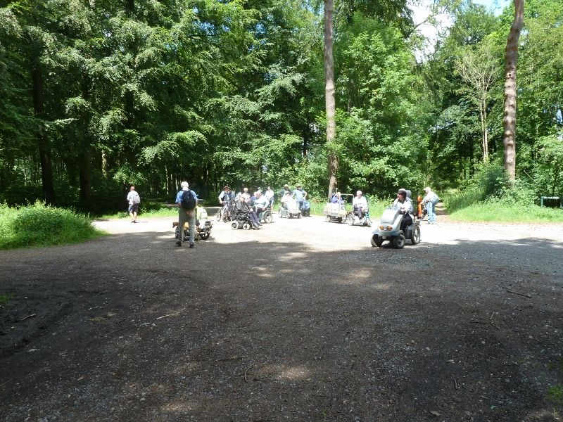 Savernake Forest 014 (800x600)