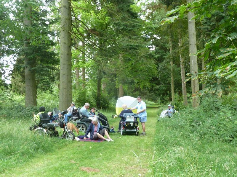 Savernake Forest 027 (800x600)