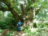 Savernake Forest 003 (800x600)