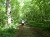 Savernake Forest 006 (800x600)