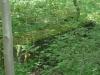 Savernake Forest 007 (800x600)