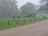Woburn Deer Park EJC 083 (640x480)