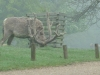 Woburn Deer Park JC 009 (640x480)