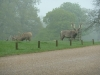 Woburn Deer Park JC 012 (640x480)