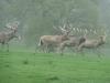 Woburn Deer Park JC 018 (640x480)