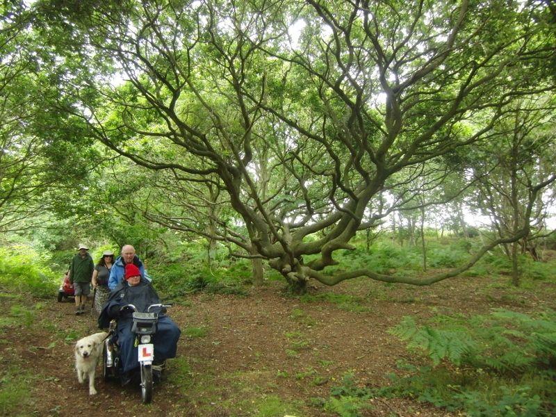 Southwold to Walberswick Marsh 063 (800x600).jpg
