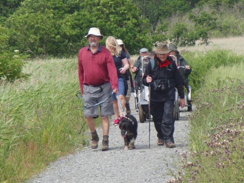 Southwold to Walberswick Marsh 075 (800x600).jpg