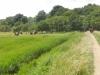 Southwold to Walberswick Marsh 087 (800x600).jpg