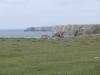 Stack Rocks to St Govan's Head 025 (800x600).jpg