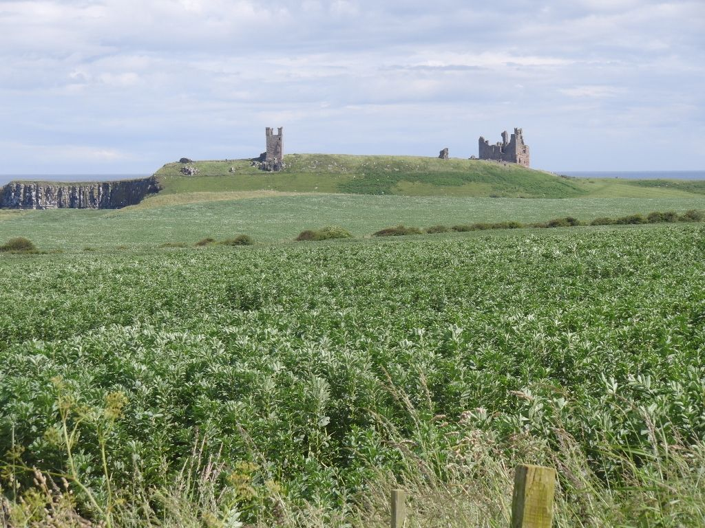 2016-07-12 Craster to Dunstanburgh Castle Golf Club 053 (1024x768)