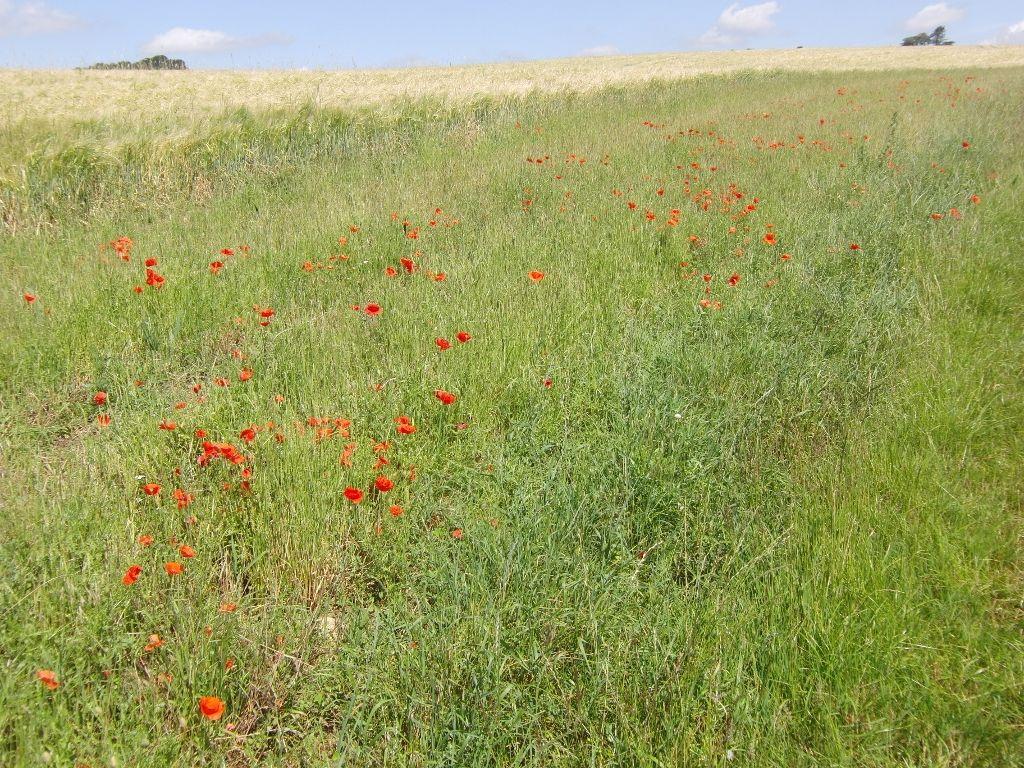 2016-07-22 Kemerton to Bredon Hill via Lalu Farm 034 (1024x768)